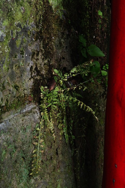 A 品川神社 38.JPG