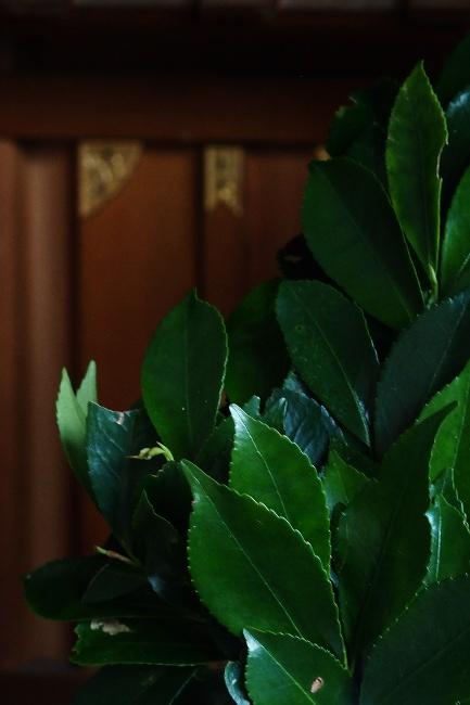 A 品川神社 45.JPG