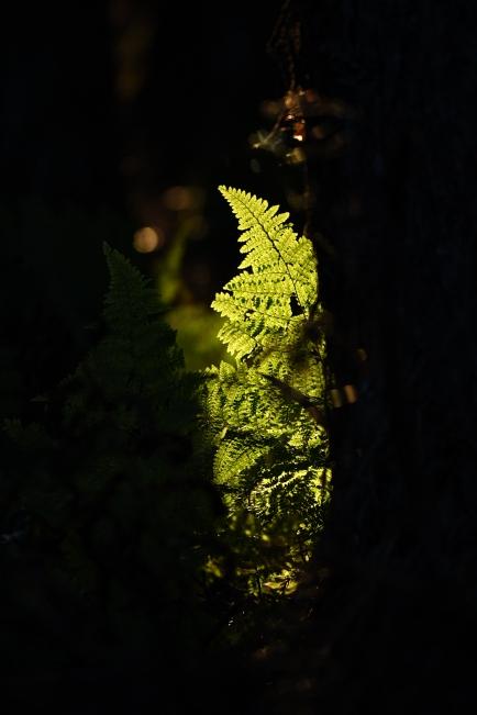 A 夕暮 18.JPG
