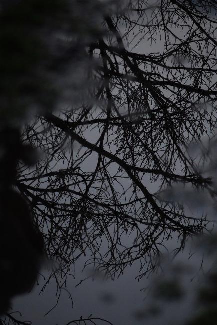 AA冬景20.JPG