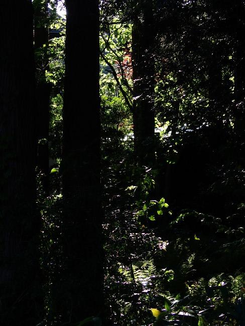 A散歩111.JPG