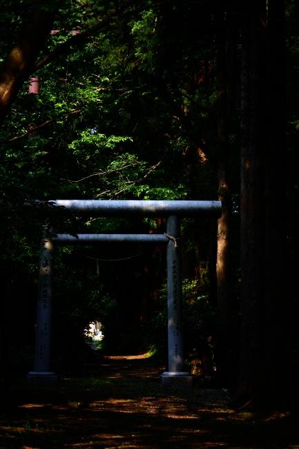 A散歩14.JPG