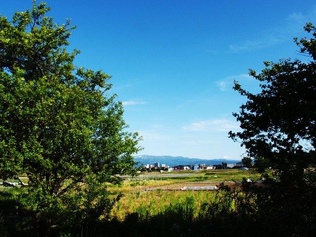 A散歩75.JPG