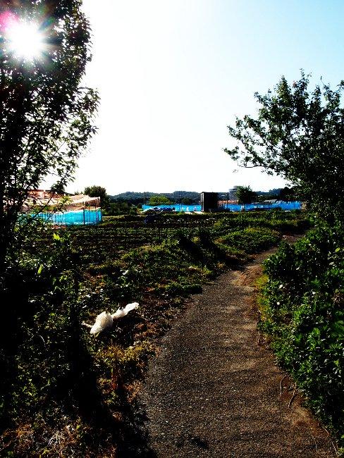 A散歩86.JPG