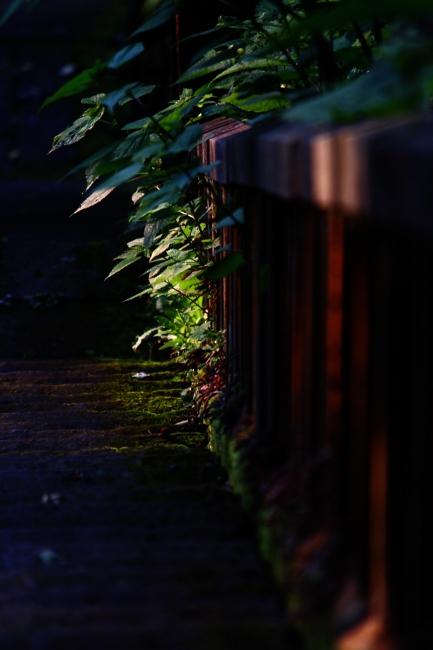 A春日山神社01.JPG