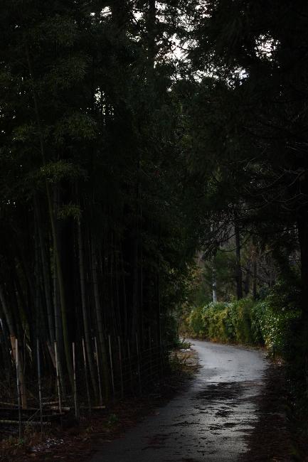 B 散歩 51.JPG