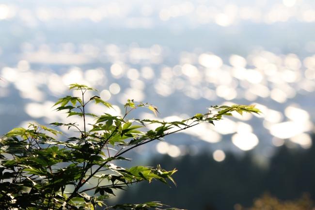 C 春日山神社 02.JPG