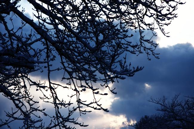 公園雪景02.JPG