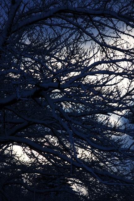 公園雪景08.JPG