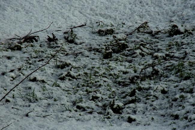 冬景19.jpg