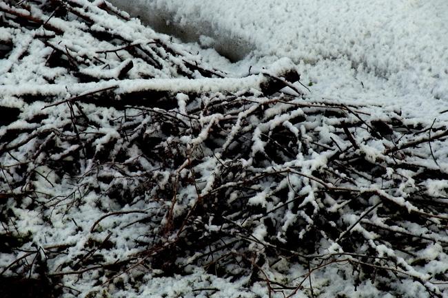冬景20.jpg