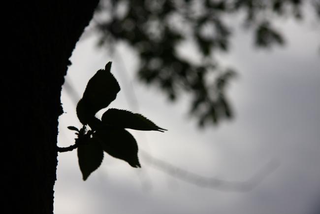 春日山54.jpg