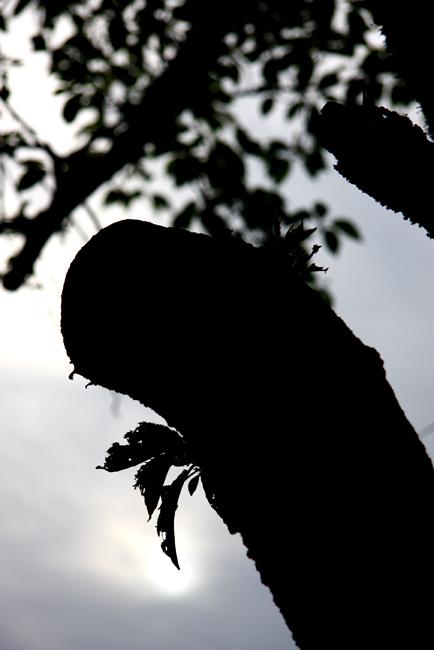 春日山55.jpg