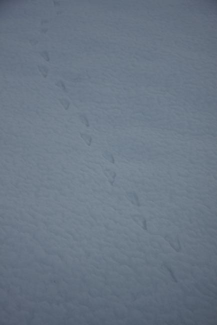 春雪10.jpg