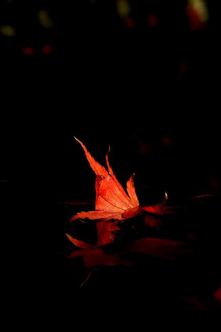 水紅葉01.jpg