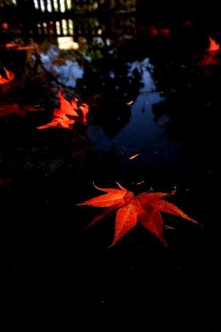 水紅葉04.jpg