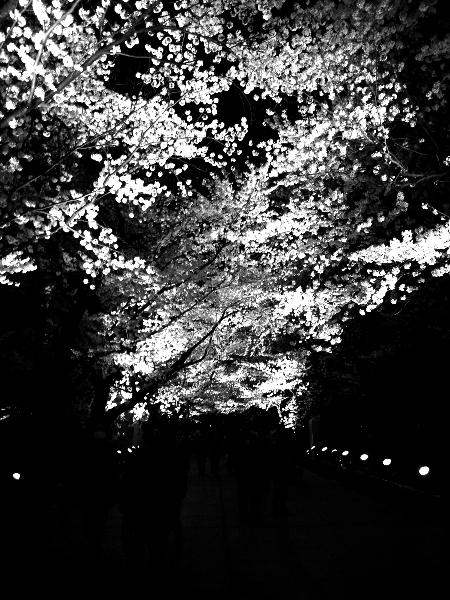 観桜会10.jpg
