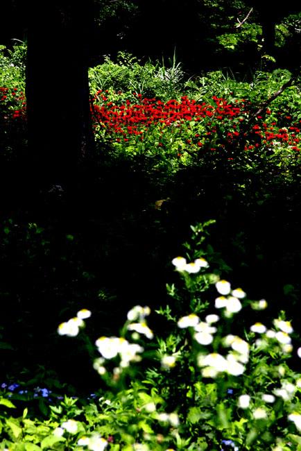 赤い花01.jpg