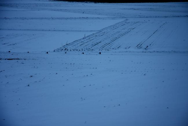 雪05.jpg