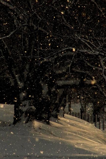 雪07.JPG