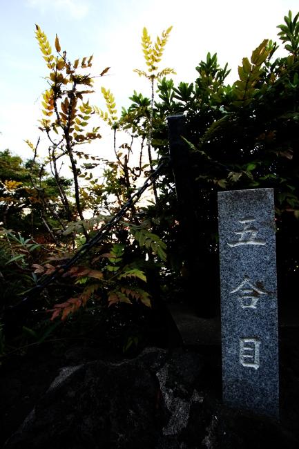 A 品川神社05.JPG