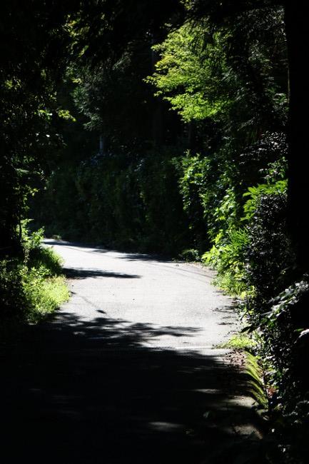 A 散歩 28.JPG