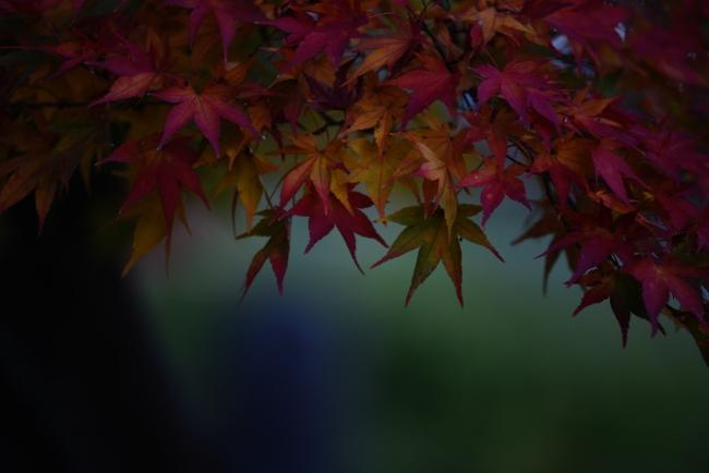 A 浄興寺 01.JPG