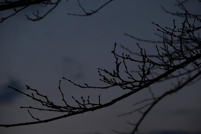 AA冬景19.JPG