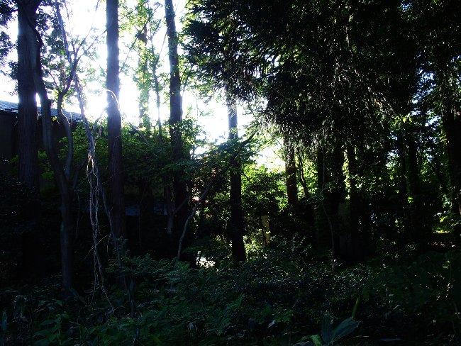 A散歩114.JPG