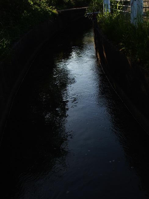 A散歩88.JPG