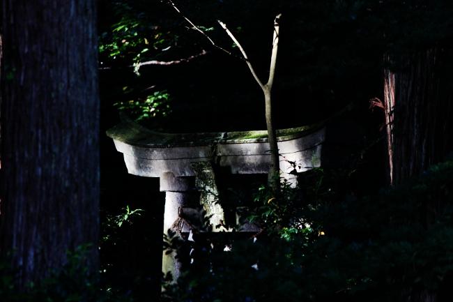 A春日山30.JPG