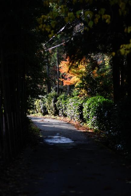 E 散歩 02.JPG