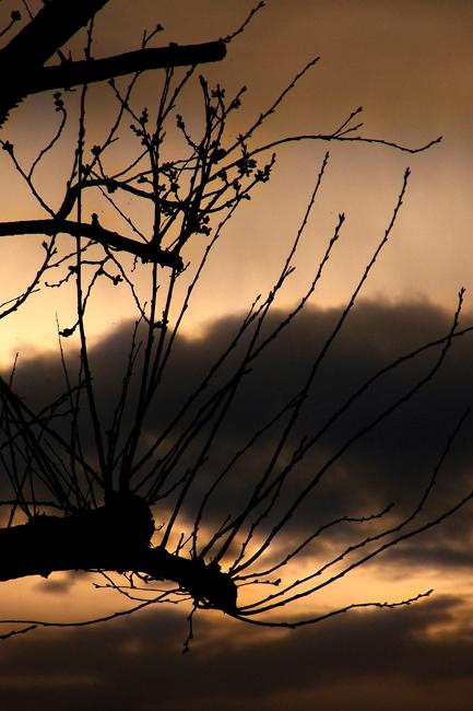 冬景27.jpg