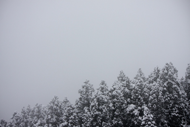 春日山神社54.JPG