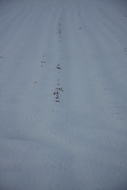 春雪11.jpg