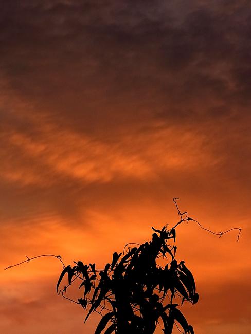朝陽04.jpg
