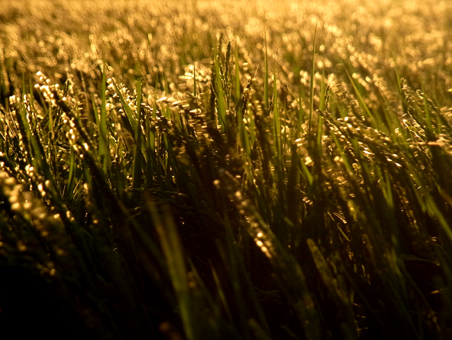 朝陽11.jpg