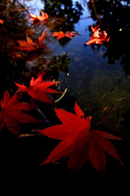 水紅葉03.jpg