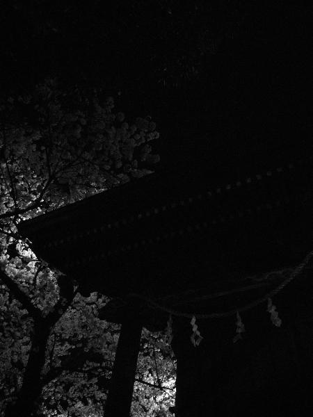 観桜会09.jpg
