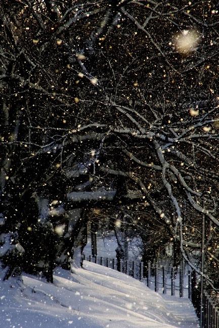 雪06.JPG