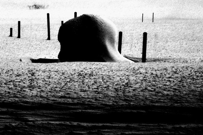 雪原103B.jpg