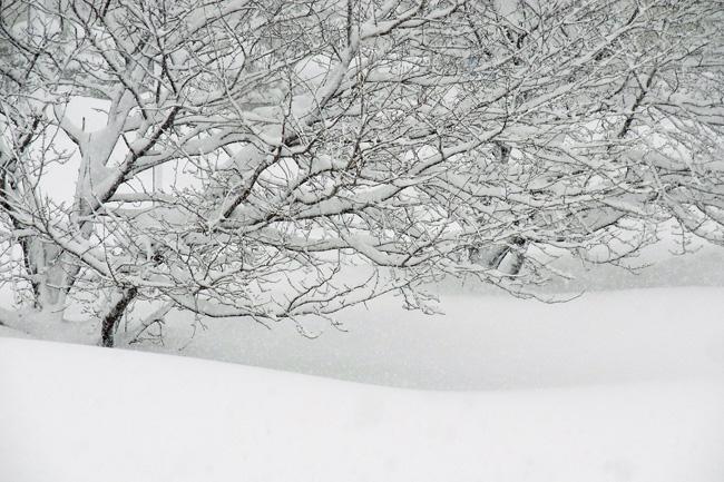 雪景02.jpg